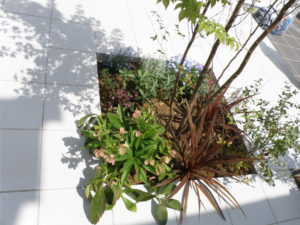 ヒメシャラの根元は季節ごとに植栽を植えて楽しめるスペースです。