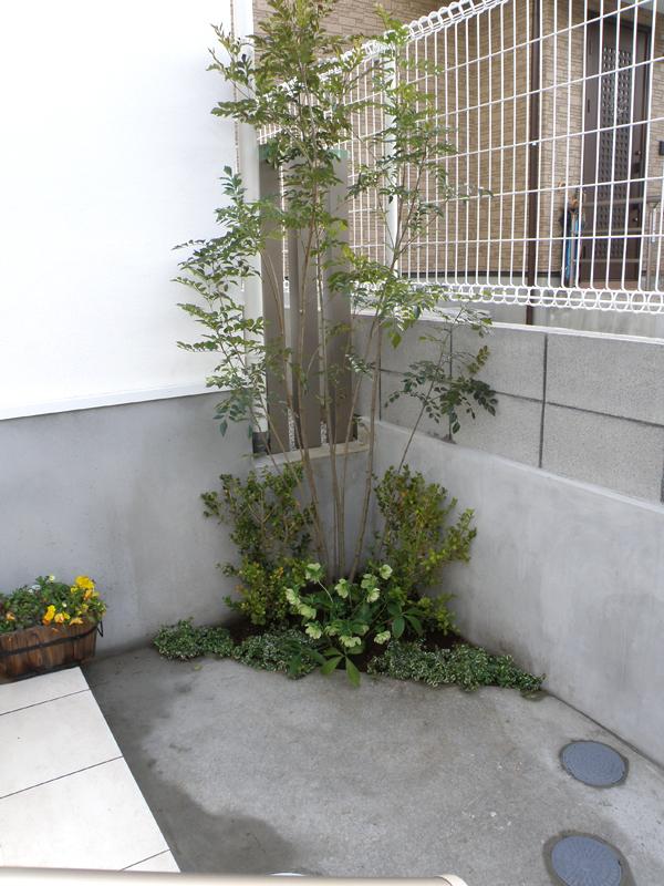 何もなかった玄関脇のちょっとしたスペースは、シマトネリコや植栽で柔らかい印象になります。
