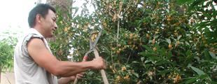 植栽・植木剪定のイメージ