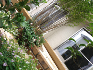 多彩な植物が入ることで、とても絵になる中庭に仕上がりました