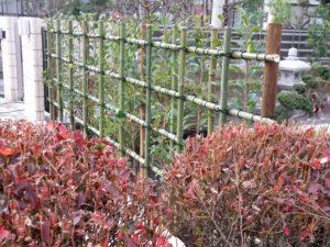 紅カナメの生垣… 今はまだ四つ目垣が主役です