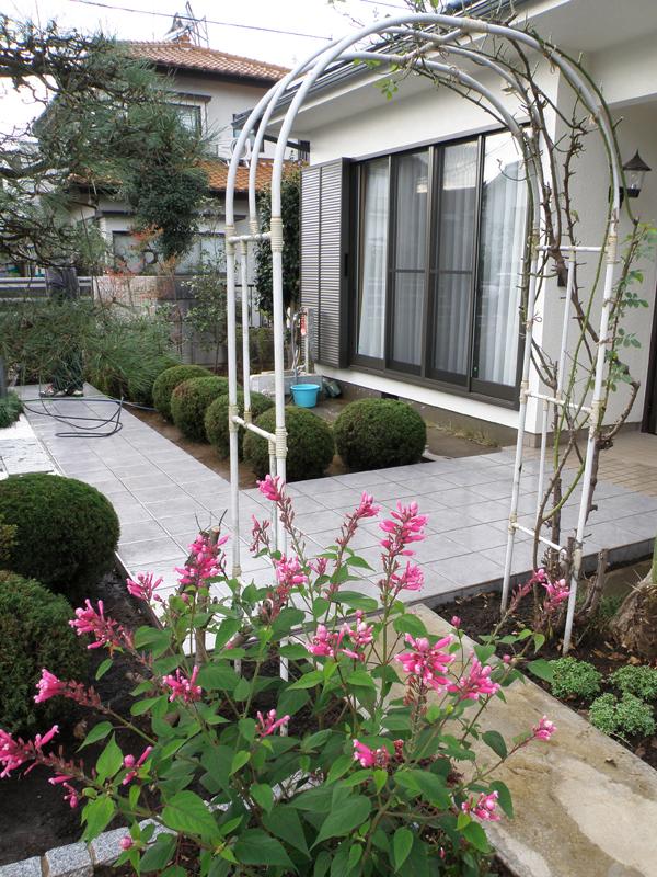 玄関前通路から庭への入り口のアーチ… バラの花が咲く頃が楽しみ