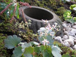 和風の庭は、こんな風に部分を切り取っても絵になる感じが好きです