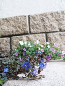 ブロックや天然石の硬さと、植物のやわらかさのバランスが大事