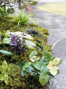 和風の庭によく合う下草類を…