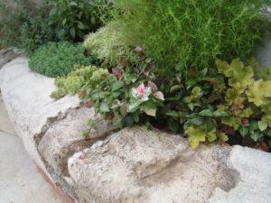 モルタル造形と植栽の相性は抜群