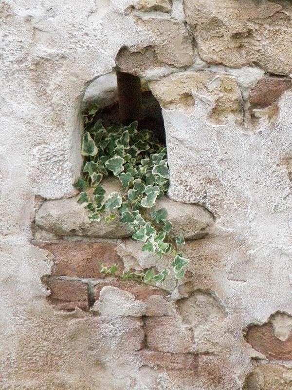 壁の小窓からアイビーをハラリと… たまらない雰囲気です