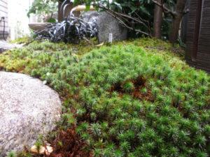 和庭でコケは… グッと雰囲気が良くなってしまうから不思議です