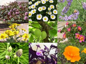 庭の主役たち… 季節の花などが華やかで、本当に楽しみです