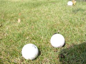 後日、芝生も良い感じで成長を… ゴルフの練習もOK!